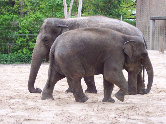 Berliner zoo im mai 2010